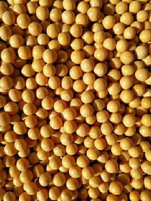 吉林省延边朝鲜族自治州敦化市有机黄豆 生大豆 1等品