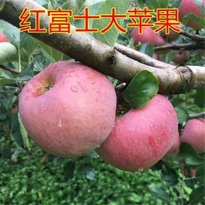 这是一张关于红富士苹果苗 1~1.5米 的产品图片
