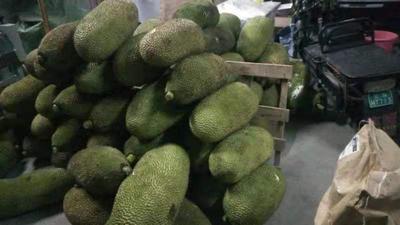 这是一张关于马来1号 15斤以上 的产品图片