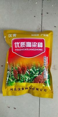 河北省沧州市青县矮杆红 杂交种 ≥95%