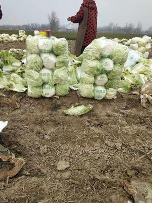 这是一张关于青杂三号白菜 3~6斤 净菜 的产品图片