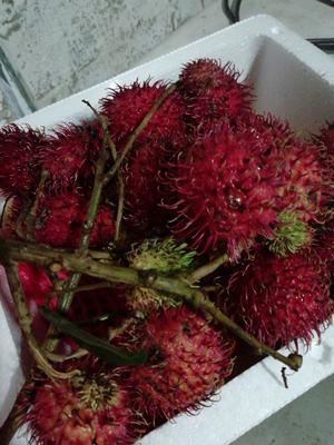 这是一张关于泰国红毛丹 2cm以上 的产品图片