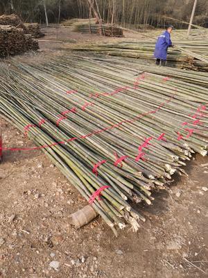 安徽省六安市裕安区竹竿 菜架竹、大棚竹