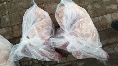 内蒙古自治区乌兰察布市商都县羊肉类 生肉