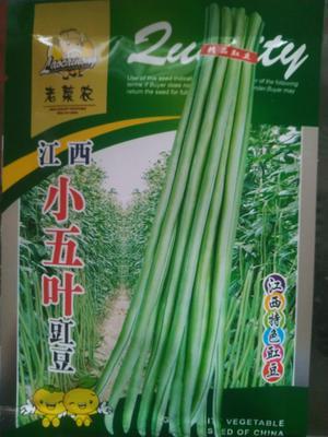 山东省济南市历下区长青豆角种子  ≥85% 江西小五叶豇豆角种子