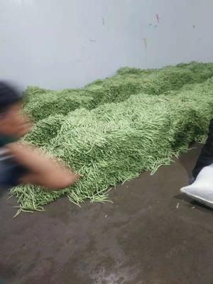 四川省攀枝花市米易县芸丰四季豆 10cm以上