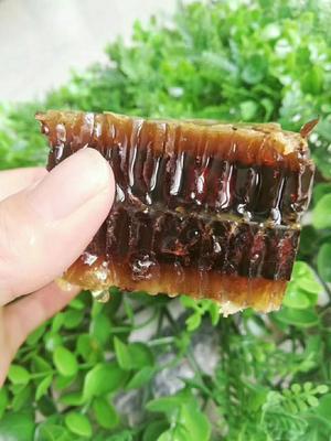 山东省临沂市蒙阴县土蜂  土蜂蜜