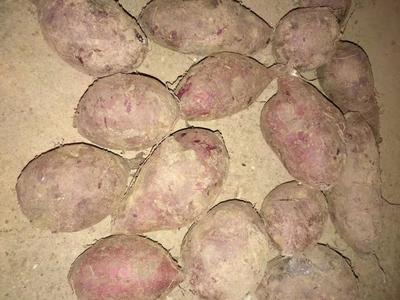 湖南省永州市江永县南紫薯008  3两~6两 紫罗兰