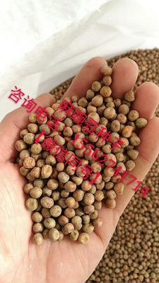 山东省菏泽市牡丹区麻豌豆 芽苗菜种子专用