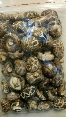 湖北省随州市曾都区原木干香菇 箱装 1年以上