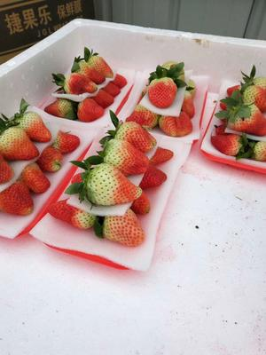 江苏省徐州市贾汪区甜查理草莓 20克以上