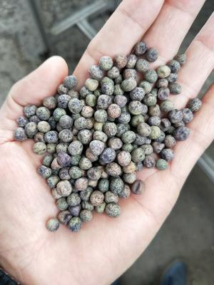 广东省广州市白云区麻豌豆 12-14cm