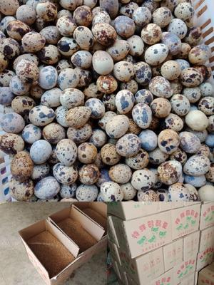 云南省昆明市官渡区土鹌鹑蛋 食用 箱装
