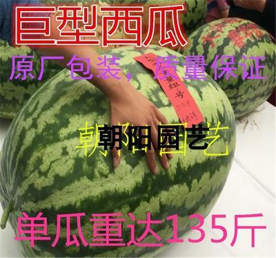 甜王西瓜种子 亲本(原种) ≥85%