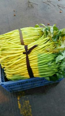 广西壮族自治区玉林市玉州区博白空心菜 25 ~ 30cm