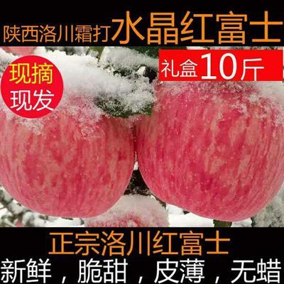 洛川苹果 特价秒杀新鲜水果脆甜包邮75到90mm大果多规格选择发货