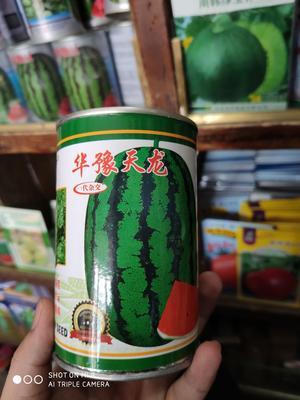 河南省商丘市睢阳区华豫天龙 亲本(大田用种) ≥97%