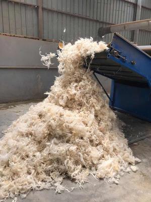 天津滨海新区羊毛