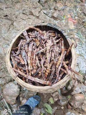 广西壮族自治区来宾市金秀瑶族自治县甜笋干 袋装 半年
