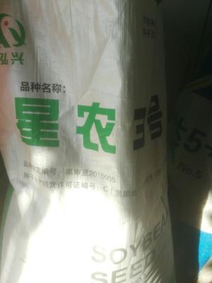 黑龙江省绥化市海伦市黄豆种子 大田用种 ≥98% ≥85% ≤13.5%