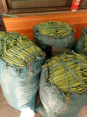 云南省保山市隆阳区大红西红柿 精品 弧三以上 大红