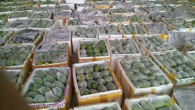 广西壮族自治区崇左市凭祥市红心木瓜 1 - 1.5斤