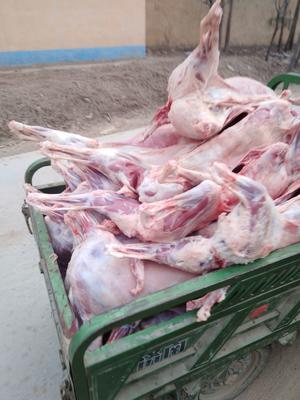 山东省滨州市阳信县绵羊肉 生肉
