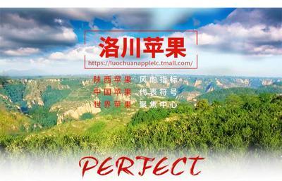 陕西省西安市灞桥区红富士苹果 70mm以上 条红 纸+膜袋