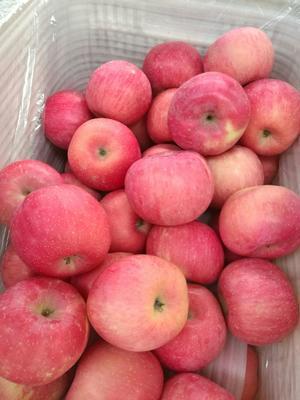 山东省威海市环翠区红富士苹果 75mm以上 统货 纸+膜袋