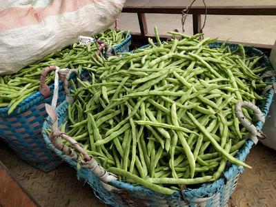 广西壮族自治区北海市银海区白花四季豆 20cm以上