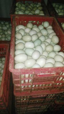 广东省清远市英德市麻鸭蛋 食用 箱装