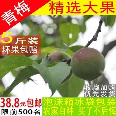 广西壮族自治区梧州市苍梧县大青梅 10-15g