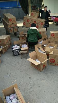 山西省临汾市襄汾县红富士苹果 75mm以上 片红 膜袋