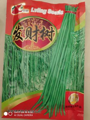 江苏省宿迁市沭阳县绿领发财树豆角种子 ≥90%