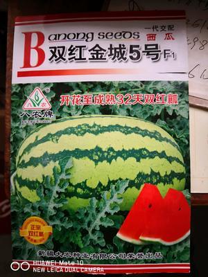 湖北省襄阳市宜城市金城五号种子 亲本(原种) ≥90%