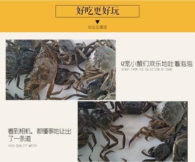 江西省南昌市南昌县生态大闸蟹  母蟹 3.0-3.5两 0.3一0.7两