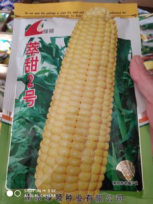 江苏省宿迁市沭阳县绿领萃甜2号玉米种子 单交种 ≥85%