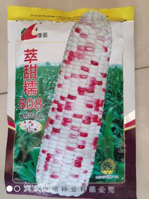 江苏省宿迁市沭阳县绿领萃甜糯608玉米 单交种 ≥85%