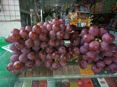 云南省丽江市永胜县玫瑰红提 1.5- 2斤 10%以上 2次果