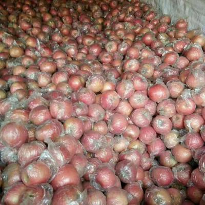 河北省石家庄市辛集市红富士苹果75mm以上 片红 纸+膜袋