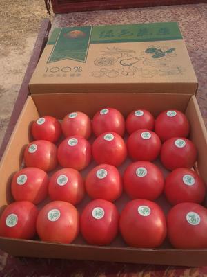 内蒙古自治区赤峰市松山区大红西红柿 通货 弧一以下 硬粉