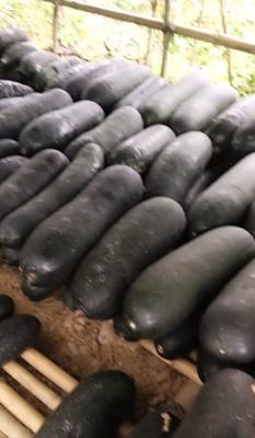 广西壮族自治区梧州市藤县黑皮冬瓜 20~30斤 吊冬瓜