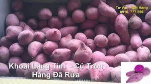 广西壮族自治区百色市靖西县越南紫薯 3两~6两