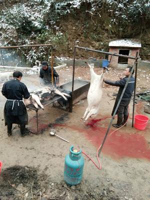 陕西省汉中市南郑县厥麻猪 统货 100斤以上