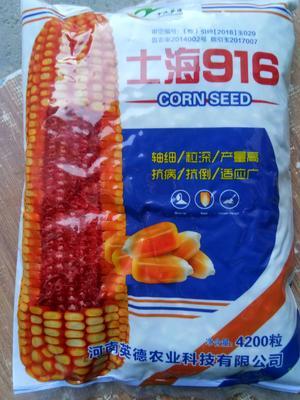 河南省郑州市金水区士海916玉米种子 双交种 ≥85%