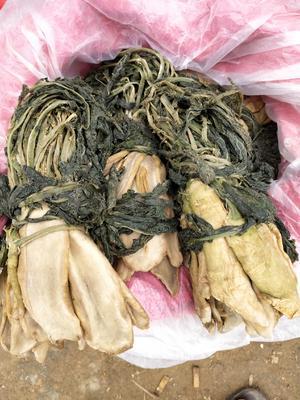 广西壮族自治区梧州市藤县萝卜干咸菜