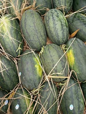广西壮族自治区崇左市凭祥市黑美人西瓜 4斤打底 8成熟 2茬 有籽
