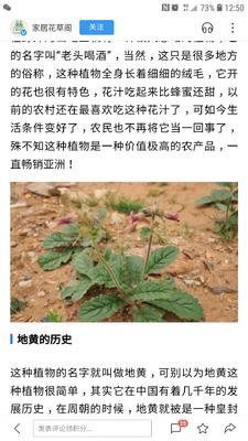 广东省佛山市顺德区鲜地黄
