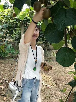 陕西省西安市周至县周至猕猴桃  100~120克 猕猴桃原产地
