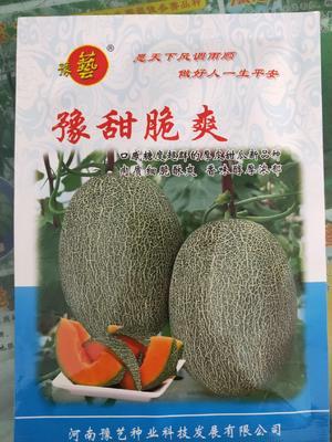 河南省郑州市金水区黄河蜜甜瓜种子 杂交种 ≥90%